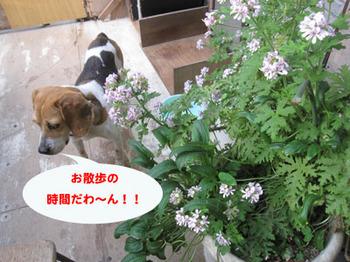 IMG_8714-01.jpg